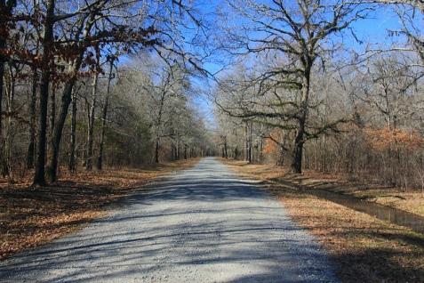 Ouachita River Swamp - Dub McKinnie Road